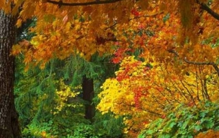 It's autumn at Forest School